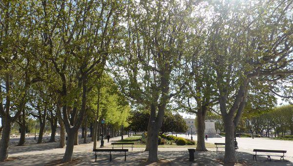 La partie centrale de la place du Peyrou et ses platanes en majesté qui ont remplacé les ormes malades au XXème siècle.
