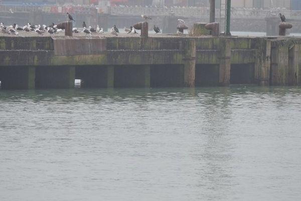 Le dauphin fait des pirouettes dans le port de Boulogne (oui ! il faut bien regarder sur la gauche !)