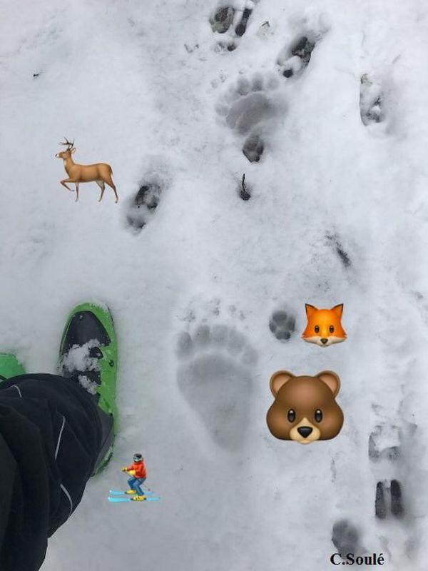 Sur la photo prise par le randonneurs on peut observer de nombreuses empreintes d'animaux
