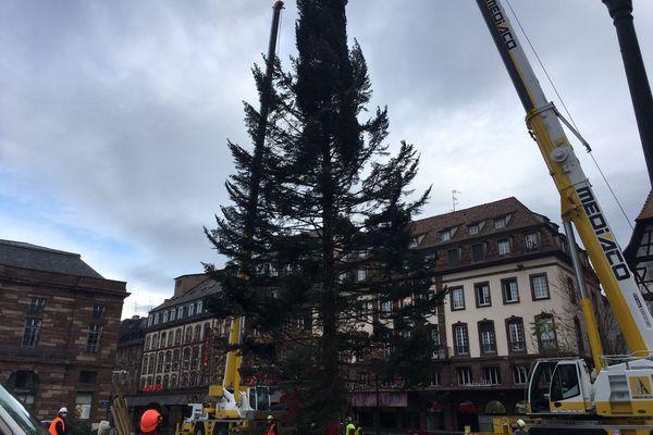 Le majestueux sapin a rejoint son emplacement, place Kléber de Strasbourg, tôt dans la matinée du lundi 2 novembre 2020.