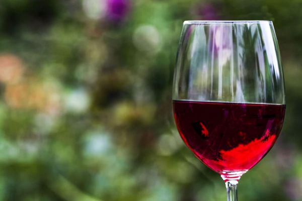 la vigne et le vin un sujet qui inspire la littérature