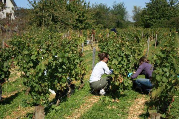 L'université de Bourgogne dispose d'une petite exploitation viticole à Marsannay-la-Côte