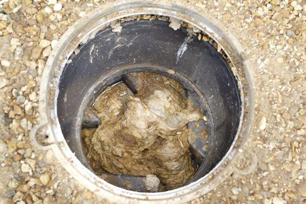 Et voici à quoi ressemblent des lingettes...une fois passées par la cuvette des toilettes!