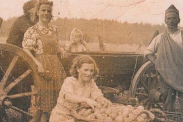 Des prisonniers français participant à la récolte des pommes de terre à Altenschönbach (Allemagne), entre 1940 et 1945. (LOUIS ROUX)