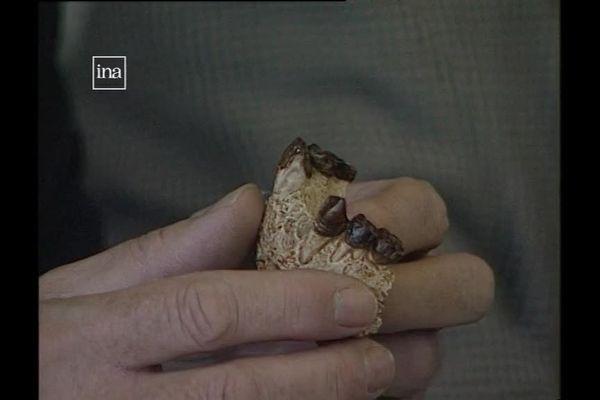 La mandibule de l'australopithèque lors de sa présentation à la presse en 1995.