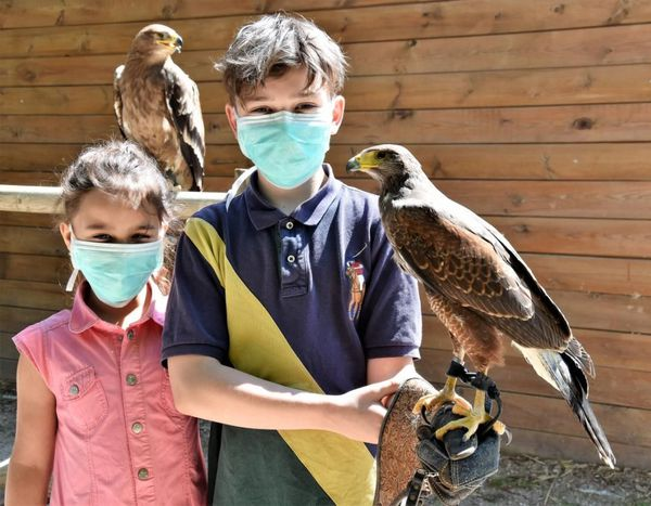 depuis la fin du confinement, le fauconnier propose des baptêmes de fauconnerie.