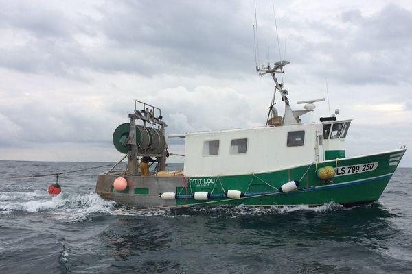 Sardinier en action de pêche