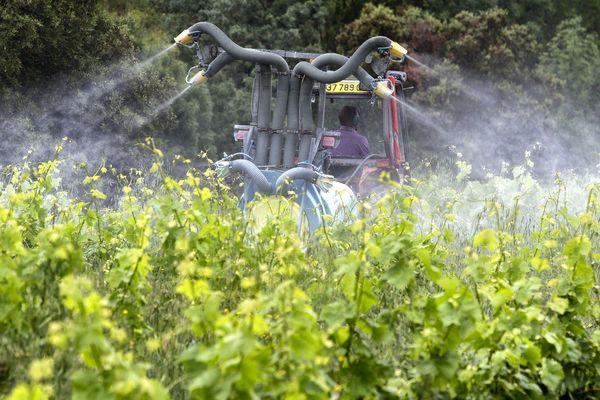 Pulvérisations de traitement sur les vignes.