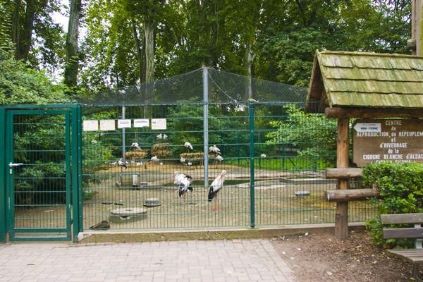 Le zoo de l'Orangerie à Strasbourg