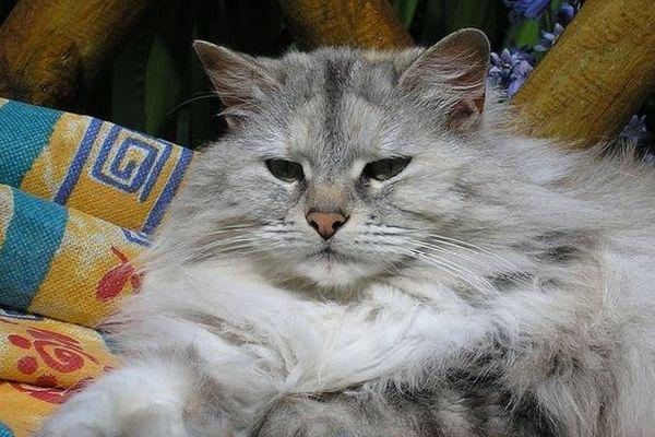 Le chat : un guérisseur de stress