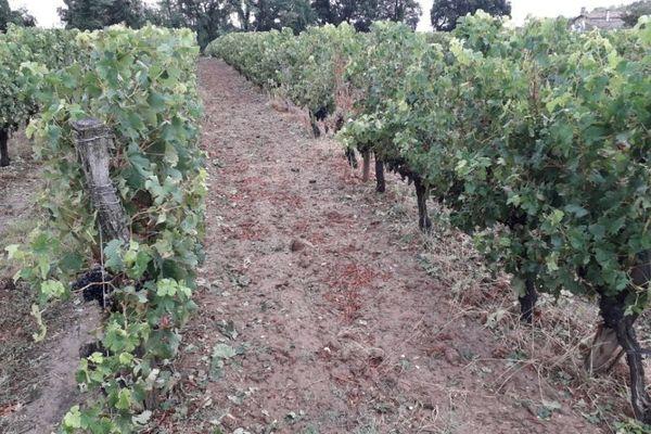 Un vignoble de côtes de Bordeaux sur la commune de Baurech, aux portes de l'Entre-deux-mers.