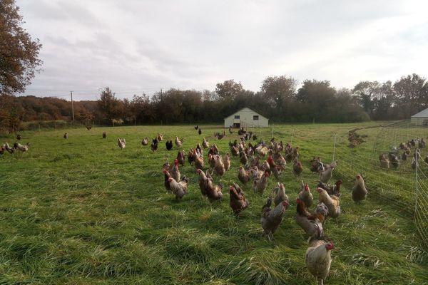 Les poulets de M. Brosseau ont été mis à l'abri des risques de contagion avec des oiseaux sauvages.