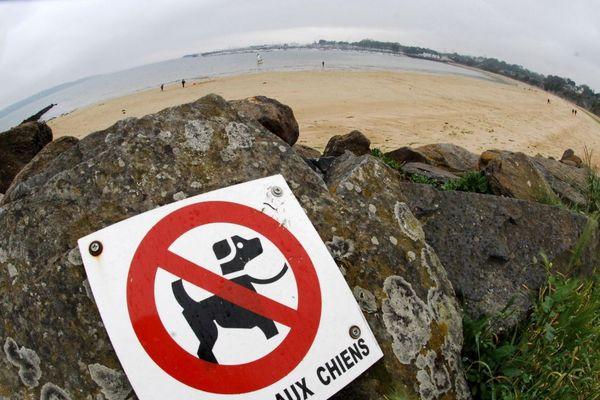 Les chiens et les chevaux sont désormais autorisés sur les plages du Finistère, une partie de l'année.