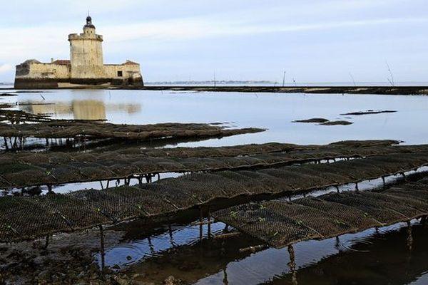 Des parcs à huîtres à Marennes d'Oléron (17)