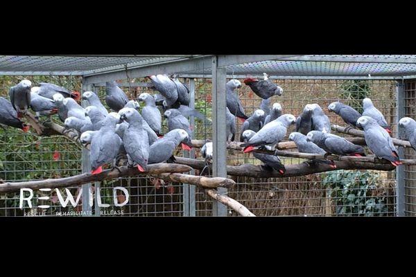 Les perroquets saisis au zoo de Pont-Scorff