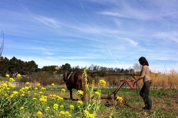 Laurence est maraîchère, elle a souhaité aller plus loin que le label AB, elle utilise des chevaux de trait plutôt qu'un tracteur - 2 mars 2017