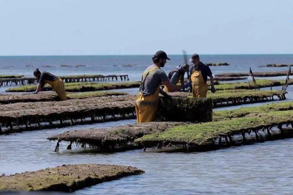 Culture d'huîtres à Noirmoutier