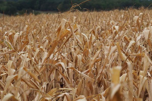 Les parcelles agricoles ont notamment été touchées par la sécheresse en région Centre-Val de Loire