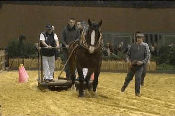 Au salon de l'agriculture, le concours de chevaux de trait commence par une épreuve de traction destinée à évaluer la puissance.
