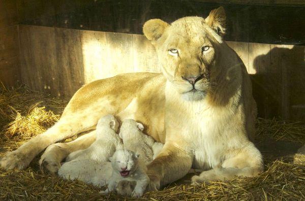 Maman et ses bébés.