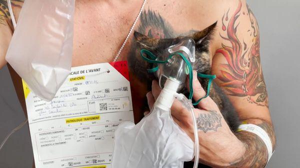 Lors du sauvetage, un chat a également pu être sauvé. Il a par la suite reçu de l'oxygène.