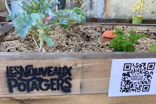 Des bacs sont installés dans des entreprises, des collectivités, des écoles, des ehpad... et 50% de la récolte est cédée à la Banque Alimentaire de la Gironde