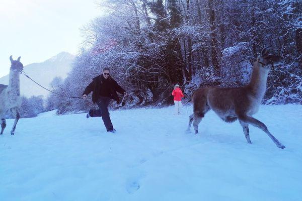 Balade insolite et ludique avec Gilles, accompagnateur en montagne et ses lamas