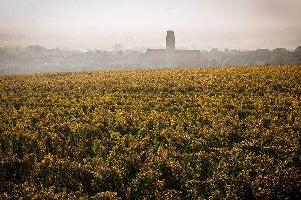 Vignes alsaciennes et vue sur le village de Pfaffenheim.