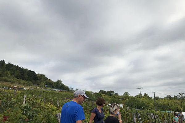 Les vendanges ont commencé à La Neuveville-sous-Montfort, samedi 5 septembre. Elle donneront le vin bleu et le gris fruité.
