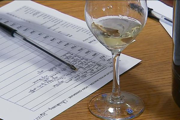Les viticulteurs dégustent le Chardonnay pour rédiger une fiche synthèse.