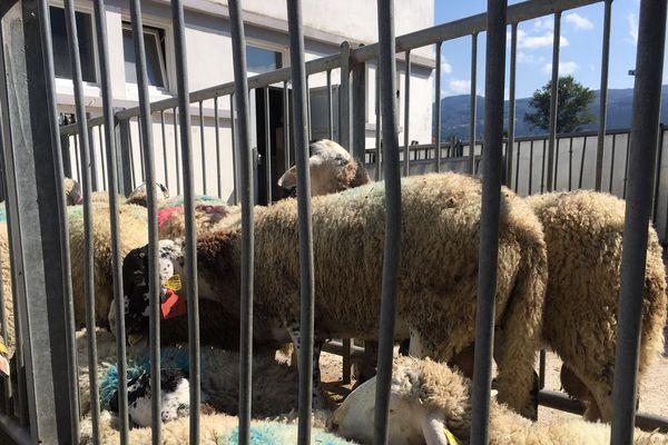 Les réservations se font au plus tôt dans les trois abattoirs agréés par la préfecture de Haute-Savoie.