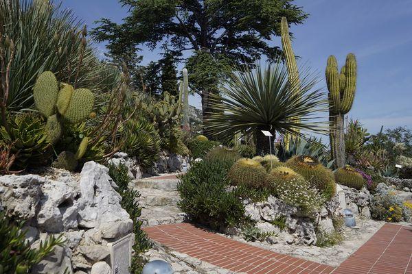 Le Jardin botanique d'Eze (Alpes-Maritimes) présente une collection de plantes méditerranéennes sur sa face nord et des cactées et des succulentes sur sa face sud.