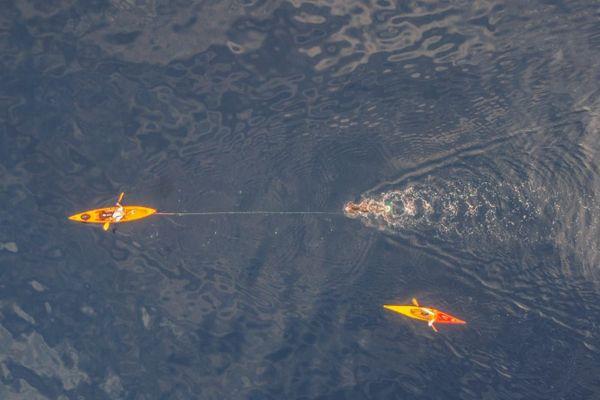 15/09/20. Thierry Corbalan, le dauphin corse, dans son 14ème défi, la traversée en monoplame Calvi Mandelieu