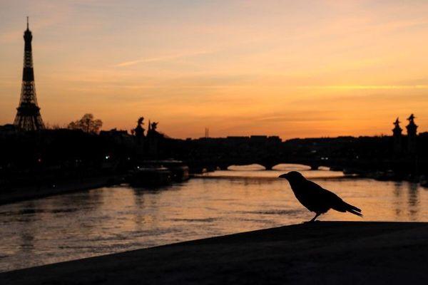 Un oiseau sur le pont de la Concorde, au-dessus de la Seine, le 18 mars dernier à Paris, au deuxième jour du confinement.