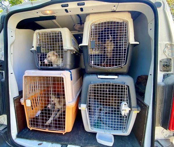 Une fois soignés et requinqués, les chiens pourront être adoptés.