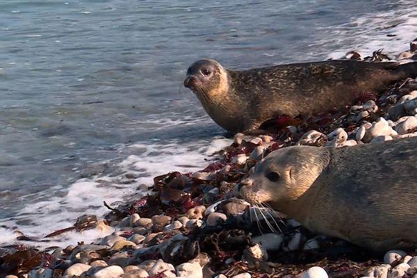 Misti, Florès, Kili et Milos ont été relâchés sur la plage d'Yport, samedi 9 octobre 2021.