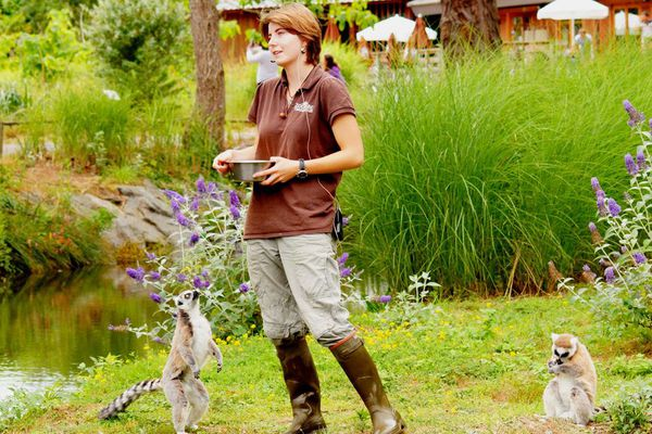 Les visites reprennent ce week-end au Zoo de Trégomeur.