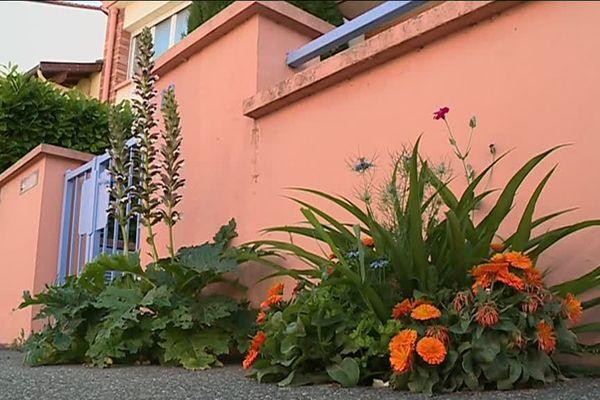 le trottoirs gagnés par la végétation