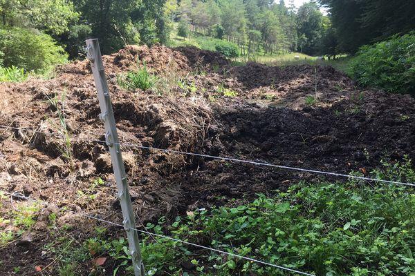 Bien qu'aucun autre élevage à proximité n'ait pu être à l'origine de la contamination, cet éleveur a dû protéger ses installations par des clôtures électriques pour éviter que les animaux sauvages ne propagent la maladie