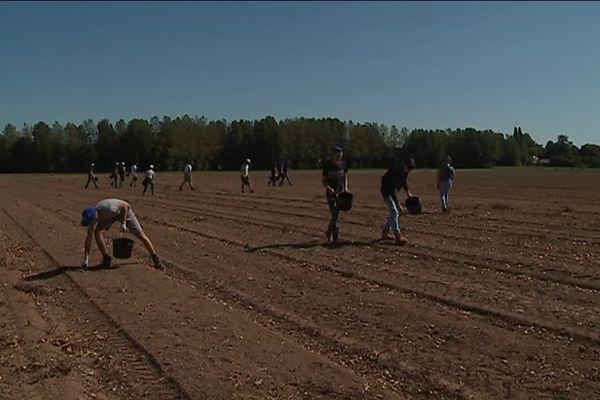 Des élèves du lycée agricole de Saint-Pierre-sur-Dives ont glané dans les champs pour les bénéficiaires de la Croix-Rouge et des Restos du coeur