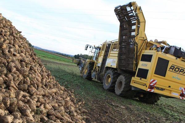 L'heure du bilan : la filière de la betterave a limité la casse en 2013.