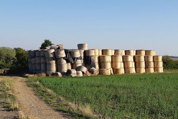 En raison de la sécheresse, les éleveurs de l'Eure pourront utiliser leurs jachères a annoncé le ministre de l'Agriculture, Julien de Normandie.
