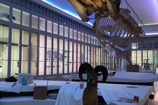 Les animaux retrouvent peu à peu leur place dans les galeries.