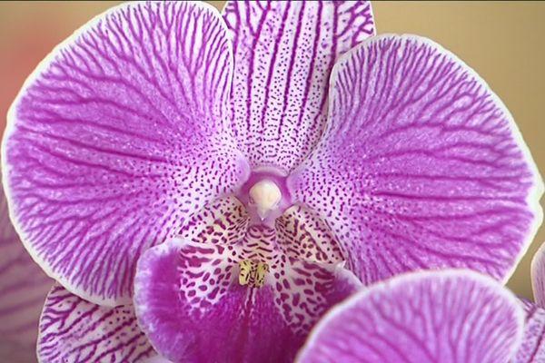 Exposition d'orchidées à l'abbaye du Moncel