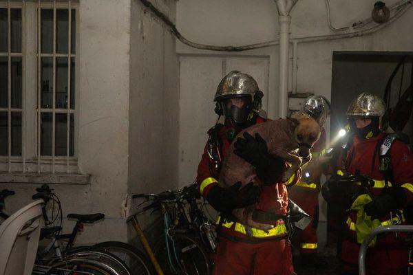 Un chien a été sauvé par les sapeurs-pompiers de Paris au cours de l'opération.