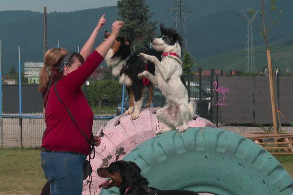 Toutes les attractions sont prévues pour que les chiens puisent se dépenser et s'amuser.