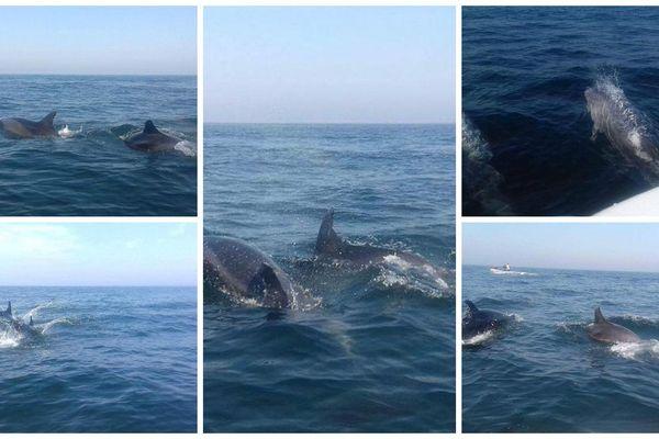 Des dauphins aperçus au large du Tréport le 25 août dernier