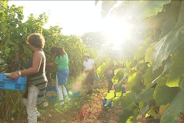 Le ministère de l'Agriculture a revu à la baisse la production de vin en 2019 à cause de la sécheresse.