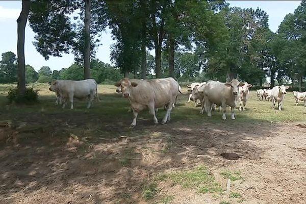 Pour nourrir leurs animaux, les éleveurs n'ont pas d'autre choix que prendre le fourrage destiné à la période hivernale.