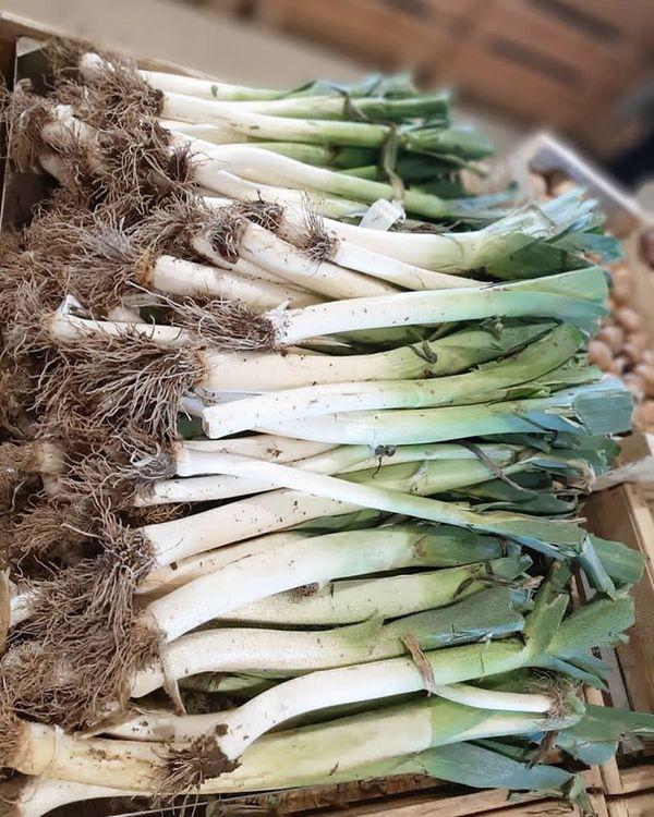 En plus du libre-service, des salariés récoltent les légumes vendus surplace à Octeville.